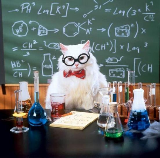 <h2>Chemistry Cat</h2>