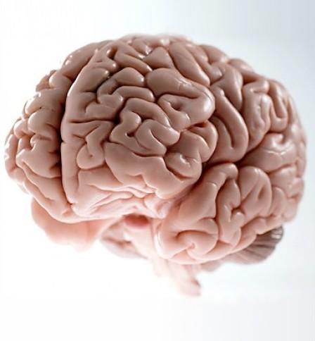 <h2>S***bag Brain</h2>